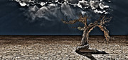 Arid Life Digital Art - Old Desert Tree by Bruce Rolff