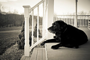 Thinking Photo Framed Prints - Old dog on a Front Porch Framed Print by Diane Diederich