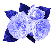 Blue And White Porcelain Prints - Old Fashioned Roses Print by Jane McIlroy