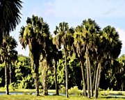 Palmettos Prints - Old Florida Palms II Print by Sandy Poore