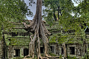 Angkor Prints - Old Growth Temple Print by James Wheeler