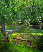 Country Scenes Metal Prints - Old Hayrake Metal Print by Thomas Schoeller