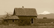 Abandoned House Prints - Old Homestead Print by Angie Vogel