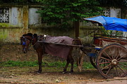 Horse And Buggy Prints - Old Horse and Buggy Print by Scott Mallon