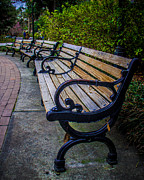 Park Benches Framed Prints - Old Iron Bench Framed Print by Perry Webster