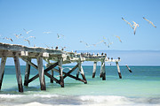 Western Birds Framed Prints - Old Jetty at Eucla Western Australia Framed Print by Colin and Linda McKie