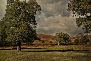 Old Digital Art Posters - Old John Bradgate Park Leicestershire Poster by John Edwards