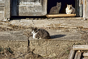 Abandoned Pets Photos - Old Knox Church Cats #2 by Nikolyn McDonald