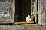 Abandoned Pets Photos - Old Knox Church Cats by Nikolyn McDonald