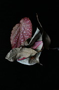 Old Pyrography Prints - Old leaves. Print by Tanya Polevaya