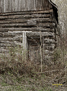 Log Cabin Photographs Acrylic Prints - Old Log Cabin Acrylic Print by Dennis Ninmer