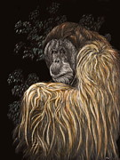 Orangutan Drawings - Old Man of the Forest by Heather Ward
