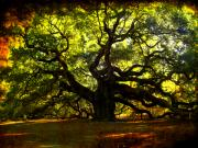 Texture Tapestries Textiles Acrylic Prints - Old old Angel Oak in Charleston Acrylic Print by Susanne Van Hulst