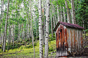 Ghost Town Outhouse Prints - Old Outhouse Among Aspens Print by Lincoln Rogers