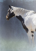 Paint Horse Posters - Old Paint Poster by Betty LaRue