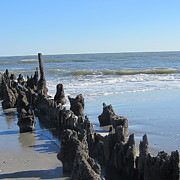 Pilings Prints - Old Pier Remnants Print by Cathy Lindsey