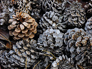 Pine Cones Art - Old Pinecones by Kae Cheatham