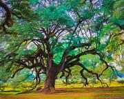 Perry Webster - Old Plantation Oak