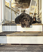 Lazy Dog Posters - Old Porch Dog Poster by Diane Diederich