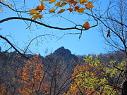 Oldrag Prints - Old Rag Hiking Trail - 121213 Print by DC Photographer