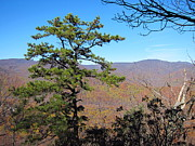 Oldrag Prints - Old Rag Hiking Trail - 121221 Print by DC Photographer