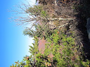 Oldrag Prints - Old Rag Hiking Trail - 121226 Print by DC Photographer