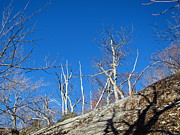 Hiking Metal Prints - Old Rag Hiking Trail - 121245 Metal Print by DC Photographer