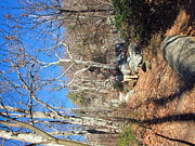Hiking Framed Prints - Old Rag Hiking Trail - 121246 Framed Print by DC Photographer