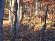 Hiking Photos - Old Rag Hiking Trail - 121266 by DC Photographer