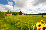 Flowers Sunflowers Barn Prints - Old Red Barn. Print by Kelly Nelson
