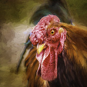 Julie Palencia - Old Rooster Portrait