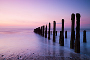 Orange Beach Prints - Old Sea Defence Posts at Sunrise Print by Colin and Linda McKie