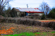 Old Country Roads Photos - Old Shed 22 by Andy Savelle