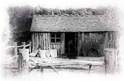 Shed Digital Art Posters - Old Shed Poster by Paul Stevens