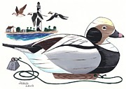 James Lewis Metal Prints - Old Squaw Decoy  Metal Print by James Lewis