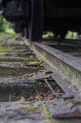 Gravel Road Prints - Old Steel Railroad Tracks Print by Steve Hurt