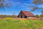Farm Fields Framed Prints - Old Tin Roofed Barn In Spring - Rural Georgia Framed Print by Mark E Tisdale