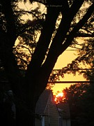 Tree In Golden Light Posters - Old Tree and Sunset Poster by Sonali Gangane