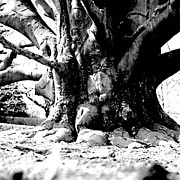 Jean Macaluso - Old Tree Ground Up 1