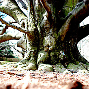 Jean Macaluso - Old Tree Ground Up 2