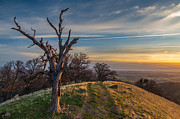 Marc Crumpler - Old Tree On A Hill At...