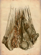 Elena Yakubovich - Old Tree Stump - Sketch...