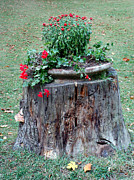Trunk Pyrography Prints - Old Tree Trunk with Flowers Print by Ioana Ciurariu