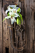 Lilies Prints - Old tuba and white lilies Print by Garry Gay