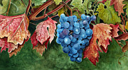 Napa Valley Vineyard Paintings - Old Vine Zinfandel by Debbie Hart
