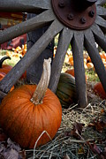 Farm Stand Art - Old Wheel Pumpkin by Kerri Mortenson