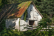 Debbie Karnes Prints - Old Whitewashed Barn in Tennessee Print by Debbie Karnes