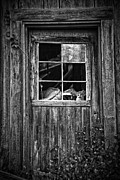White Fur Prints - Old Window Print by Garry Gay