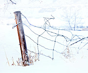 Canadian Landscape Prints - Old Wire Fence Print by Theresa Tahara