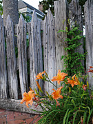 Jeanne  Woods - Old Wood Fence and Lilies